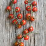 """""""tomatoes"""" by sabrakrock"""