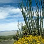 """Tucson Desert Drive"" by kphotos"