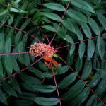 """""""Plant Order"""" by bavosiphotoart"""