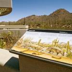 """""""Tucson Saguaro National Park"""" by kphotos"""
