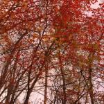 """Autumn Splatter"" by robbdee40"