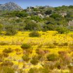 """Wild flowers of the Cederberg"" by Martin_Heigan"