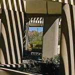 """Saguaro Natl Park Shadows"" by kphotos"