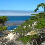 """Cypress View at 17 Mile Drive"" by BobFikePhoto"
