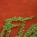 """Vine on Brick"" by BillDaley"