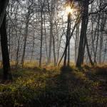 """""""Forêt d"""