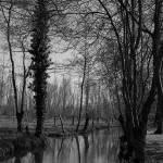 """Marais poitevin"" by fabdany"
