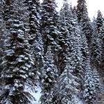 """""""Big Pines"""" by aubreyguynn"""