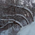 """""""02-19-06 Scrub Oak"""" by aubreyguynn"""