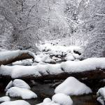 """Holbrook Creek"" by aubreyguynn"
