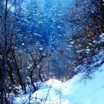 """Heading In To Pines"" by aubreyguynn"