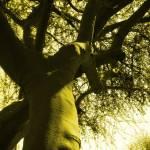 """Mighty Branches II"" by artbyaleksandra"