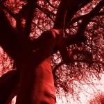 """""""Mighty Branches III"""" by artbyaleksandra"""