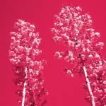 """Two Blossoms II"" by artbyaleksandra"