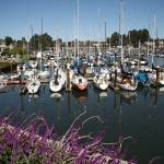 """The Harbor at Santa Cruz, CA"" by MindsEyeImagery"