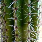 """""""Prickly Cactus"""" by artbyaleksandra"""