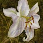 """White Tiger Lily"" by Nanwright"