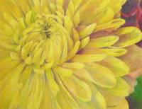 November Flower: Chrysanthemum
