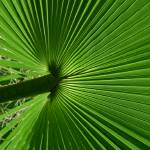 """The Frond"" by BillDaley"