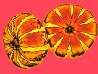 Striped Pumpkins on Pink