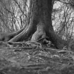 """""""WRK Tree Trunk - DRK"""" by EtierPhotography"""