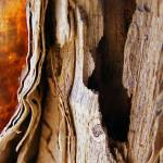"""Paper Bark"" by BarryJohansen"