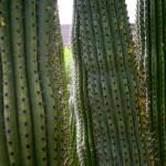"""""""Three cacti"""" by artbyaleksandra"""