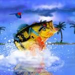 """orange  Peacockx34fx"" by fishead"