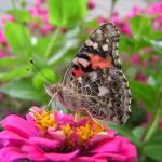 """Butterfly"" by fishead"