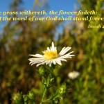 """""""Isaiah40:8"""" by jyvonne"""