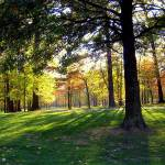 """Autumn Fall Walkway Path"" by PhotoFitness"
