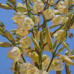 """Yucca In Full Bloom"" by katkuzma"