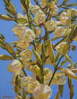 Yucca In Full Bloom