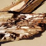 """Driftwood Detail I"" by BarryJohansen"