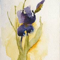 """Deep Purple Iris"" by Rose Bradley"