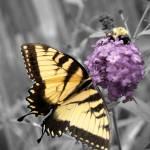 """""""Butterfly"""" by Dracazoe"""