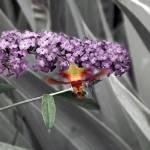 """""""Hummingbird Moth"""" by Dracazoe"""