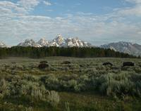 Nomads of the Tetons