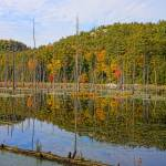 """Fall colors at Pawtuckaway State Park"" by digitalvisions"
