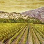 """Napa Vineyard"" by PeterWorsley"