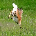 """""""running deer"""" by artfilmusic"""
