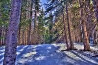 Forest near the Bear lake (HDR)