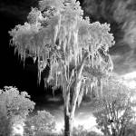 """Infrared Tree"" by dbsphotography"