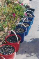 0003 - Pelopponese - Olive buckets