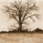 """""""The Old Tree"""" by Davidking"""