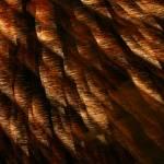 """""""Fireworks6"""" by MaesGarden"""
