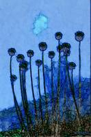 Allium in Blue