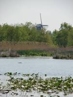 DeZwaan Windmill Holland Michigan