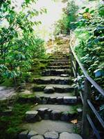 Stairway Through The Garden