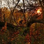 """""""Fall Sunset"""" by ovlov"""
